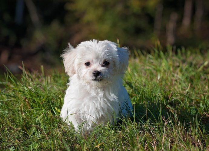 Jak dbać o zdrowie psa?
