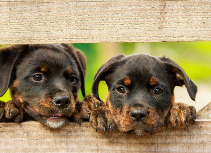 Jaką karmę dla psa wybrać?